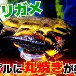 ミドリガメは「コンロで丸焼き」にするだけで十分美味しい