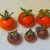 食用不適のミニチュア柿「マメガキ」と「ロウヤガキ」を食べ比べてみた