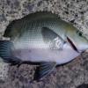 魚の生命力と再生能力に驚愕させられた…