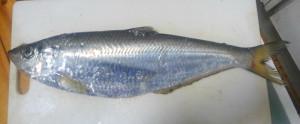 KIMG3371