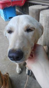 ついでにわんわんおに癒されてきた 撫でられると寝る犬、それは正義
