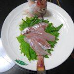 憧れの「ハタハタの刺身」を造って食べた!