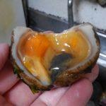東京湾奥産のシロボヤで「ホヤたまご」を作って食べてみた