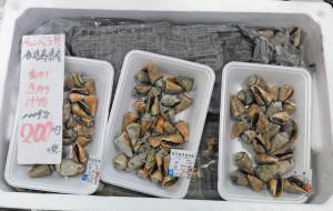 マガキガイ,チャンバラ貝