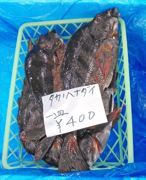 「地魚」はマイナーじゃないと意味がない②:外房でマイナー地魚を売る店リスト
