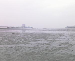 三番瀬,市川