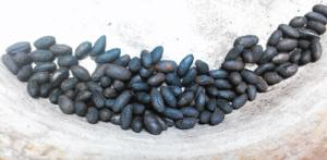 ネズミモチ,種子,コーヒー