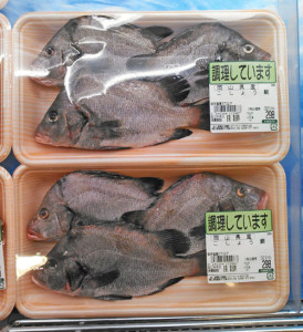岡山ではイサキ科の背鰭の目立つ魚はみんな「こしょう鯛」か「たもり」