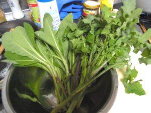 苦菜とノゲシ