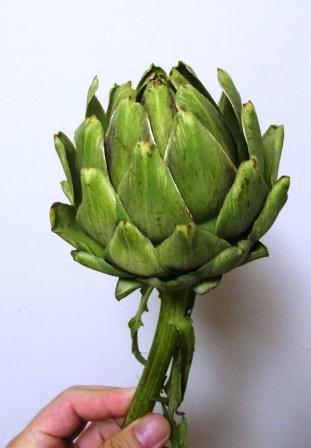 アーティーチョークは茎が一番おいしい!&野生のアーティーチョークを食べてみた