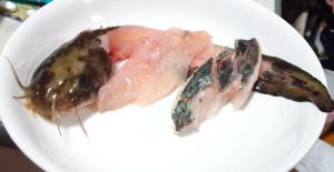 ゴンズイ,刺身,野食