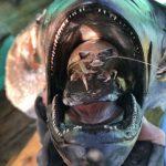 長兼丸さんのオオグソクムシ漁に同行させていただいたらお土産たくさん
