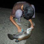 日本三大怪魚がひとつ・アカメを食べてみた