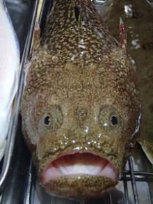 アッキーの釣りとか、お魚料理とかのブログより