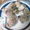 """実は""""超""""高級食材!?フジツボを刺身&塩茹でで食べた"""